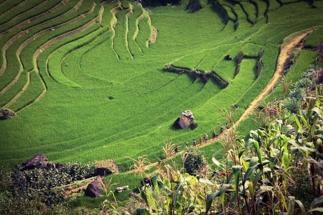 vietnamese hill