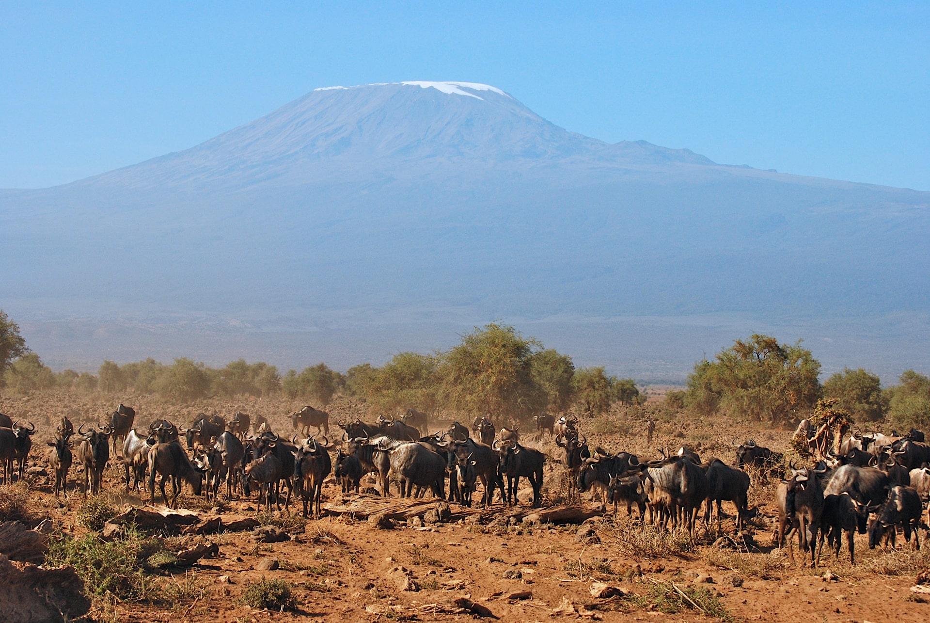 Travel to Kenya In December